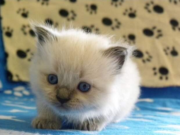 50 дней жизни котенка за 5 минут видео, кошки, прекрасное