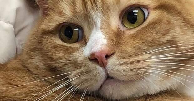 Кот любил ласку, но хозяин посчитал его надоедливым и сдал в приют
