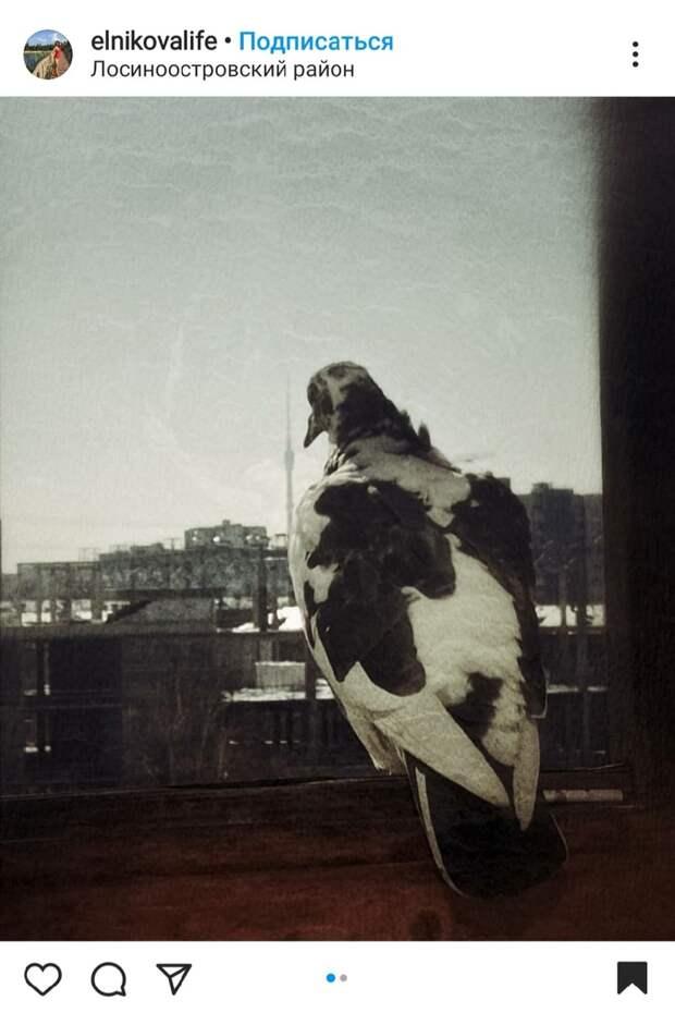 Фото дня: в Лосинке голубь-философ смотрел в окно