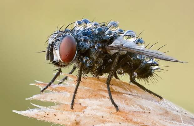 insects49 Портреты насекомых