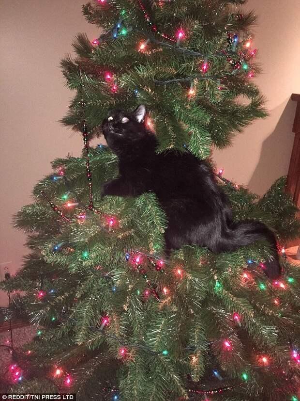 Изобретательность - их конёк животные, кот, коты, кошки, новый год, приколы с животными, фото, юмор