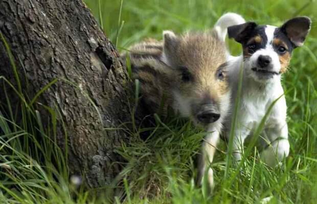 Дружба животных разных видов