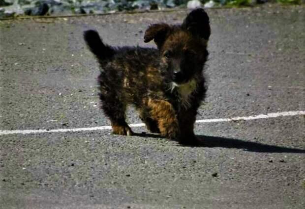 Мальчик с огромным сердцем и маленький щенок Кроха