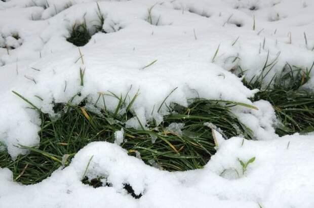 Защитить от поцелуя снежинки. Методы противостояния заморозкам