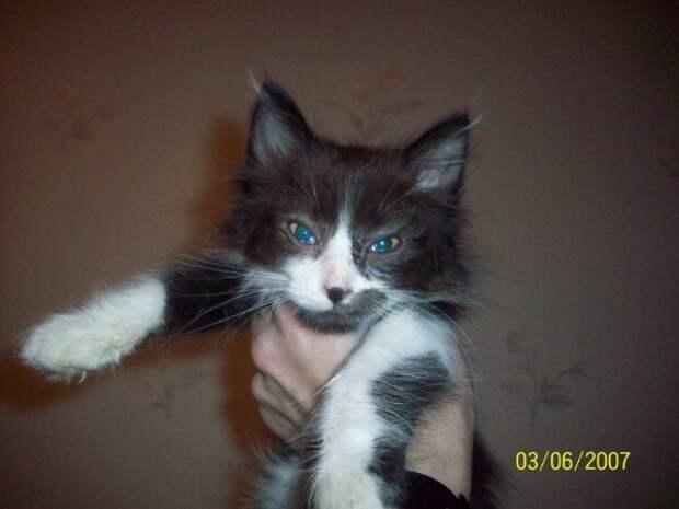 Небольшая добрая история котенка Кекса
