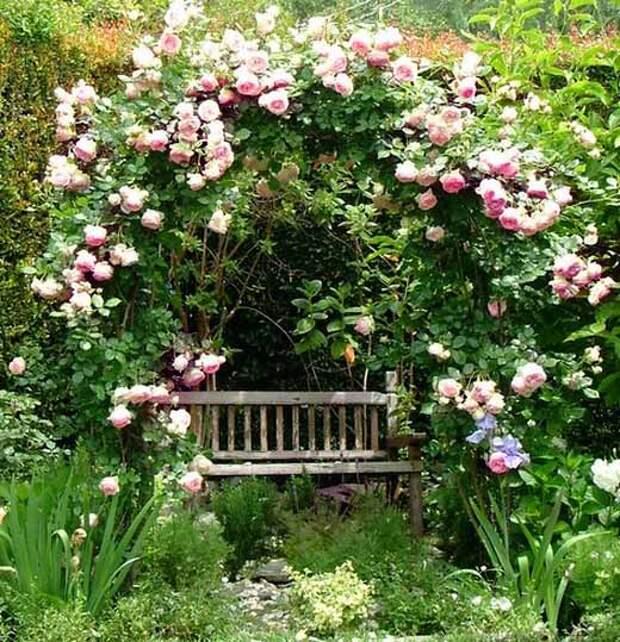 Сказочные садовые арки с плетистой розой: 35 идей