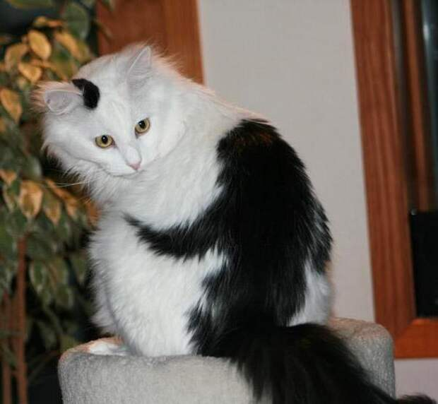 10 котов, прославившихся благодаря своему удивительному окрасу