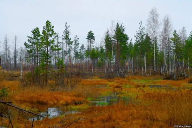 Старое болото. Мистические истории.