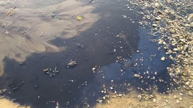 Слухи: крымский винзавод сбрасывает отходы в море