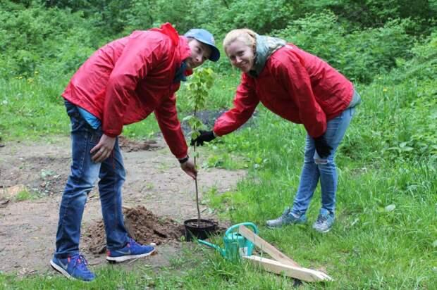 На территории парка «Кузьминки-Люблино» волонтёры Кубка конфедераций посадили деревья.