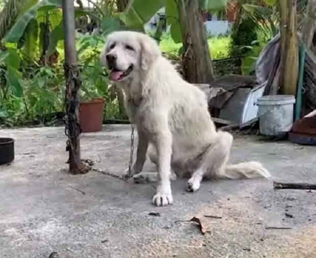 Пес сидит