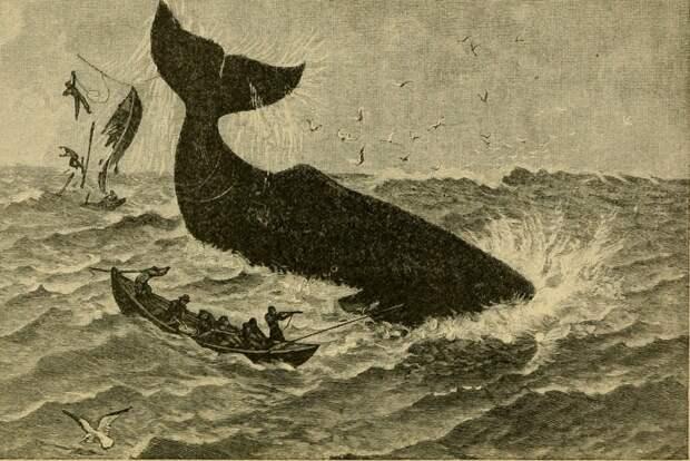 Вертикальный сон кашалота, и еще 6 потрясающих фактов о повелителе глубин