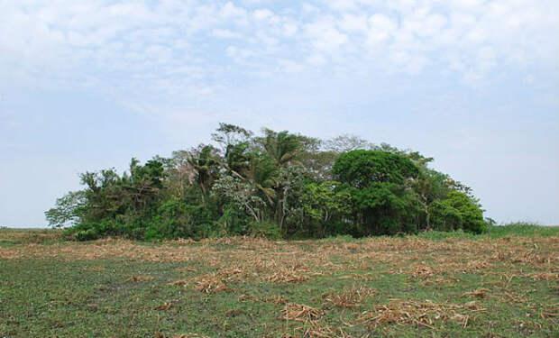 Искусственные острова построили 10 000 лет назад: лес посреди Амазонки
