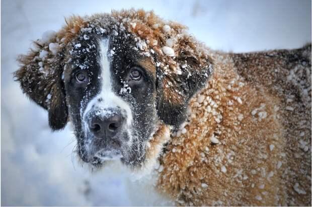 Жительница Северного рассказала, что уберегла местных собак от отравления