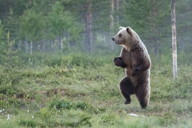 Alex Jevon / Comedy Wildlife Photo Awards / Getty Images