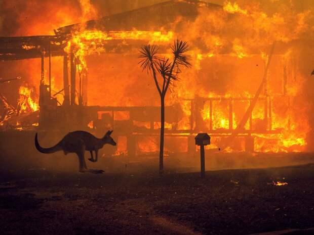 Пожары в Австралии: Марго Робби, Николь Кидман и Кейт Бланшетт взывают о помощи
