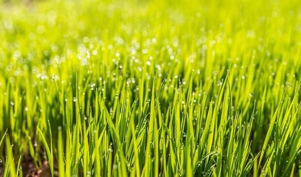 На Новочеркасском газоны восстановят до 6 августа – префектура ЮВАО