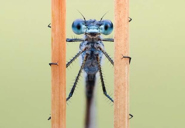 insects25 Портреты насекомых
