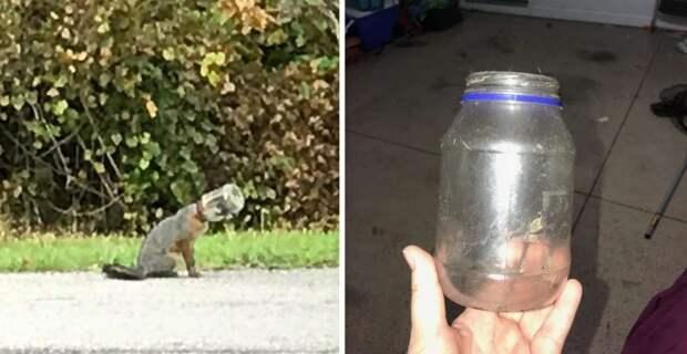 Во Флориде спасли лисенка, бегавшего с головой, застрявшей в банке
