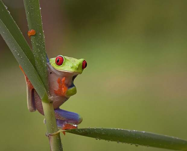Frogs12 Оригинальные лягушки