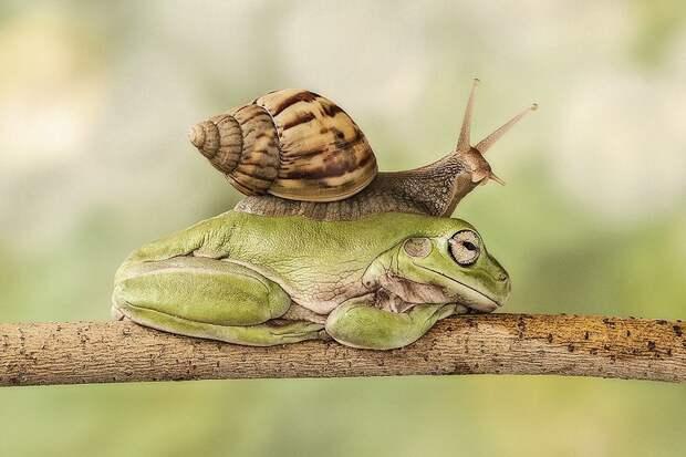 Frogs04 Оригинальные лягушки