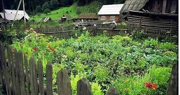 Народные приметы для садоводов-огородников!