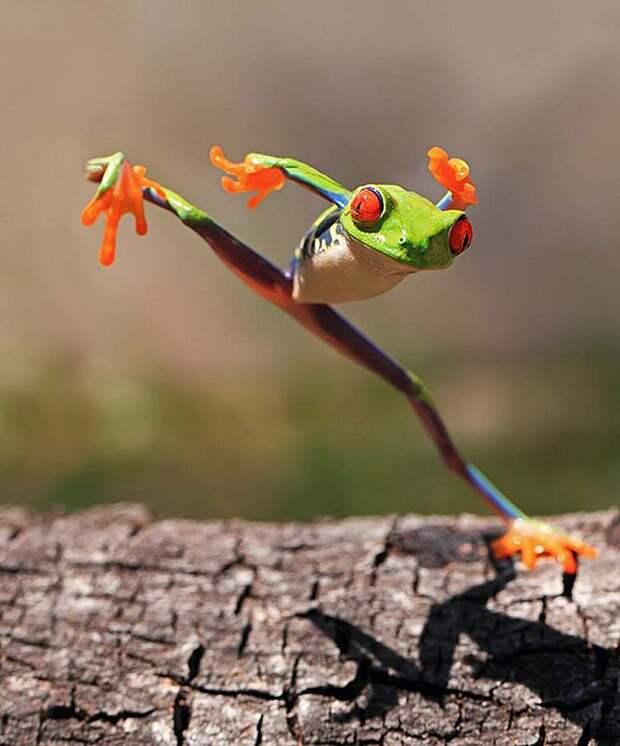 Frogs08 Оригинальные лягушки