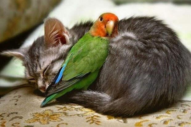 20 фотографий, которые доказывают, что и животные не могут жить без любви
