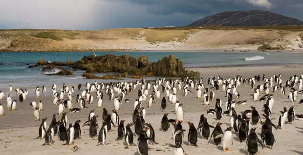 Хозяева выставили на продажу один из Фолклендских островов
