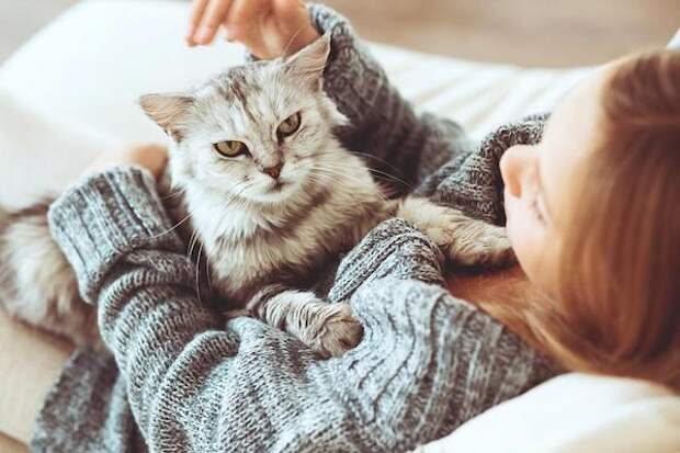 Что кошки думают о людях