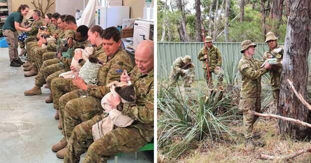 Австралийские военнослужащие в свободное время выхаживают коал