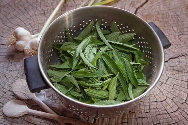 польза крапивы в салате
