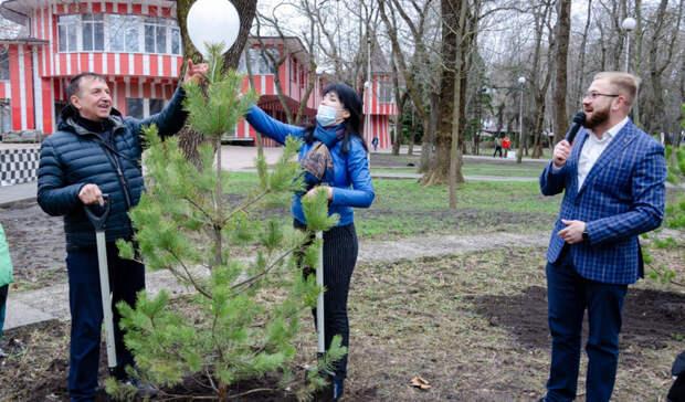 Сотню каштанов, сосен и тополей высадили в парках Ростова