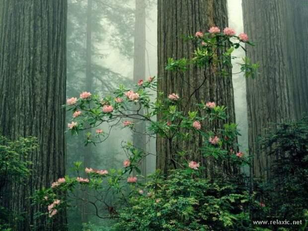 nature_034