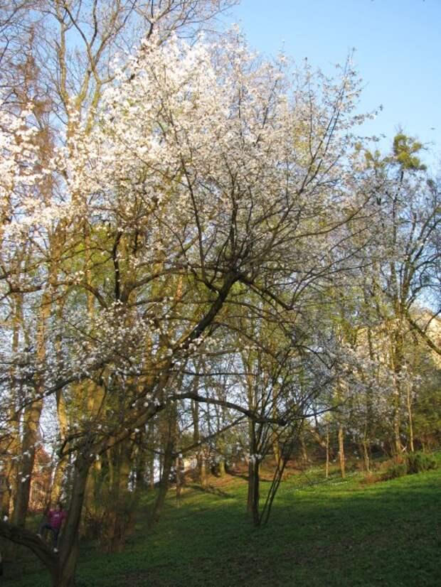 Такая разная весна