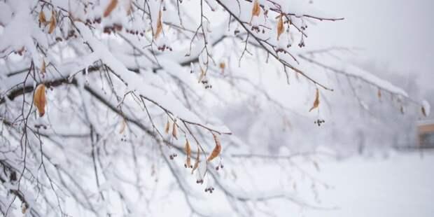 В парке «Архангельское-Тюриково» пройдет экскурсия в честь Дня Земли