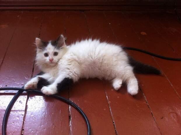 С трудом верилось, что котя выживет...