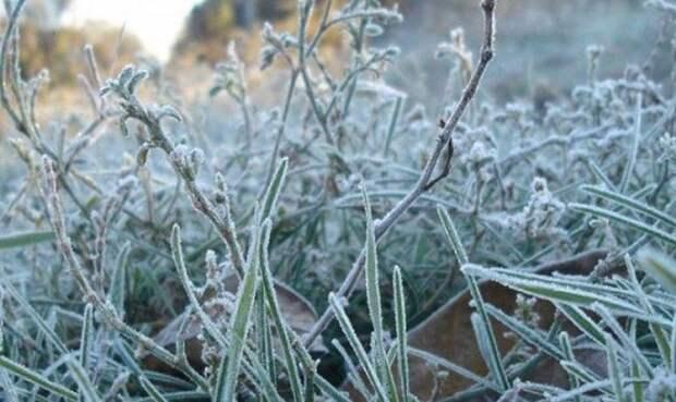 В Беларуси в ближайшие дни прогнозируют заморозки до –3°С