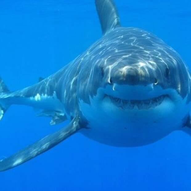Члены экипажа корабля Береговой охраны США были вынуждены отбиваться от акулы