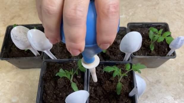 Эффективная подкормок для томатов после пикировки: проверена временем и опытом