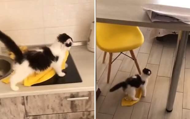 «Я наведу здесь порядок»: котенок решил сделать уборку и насмешил хозяйку
