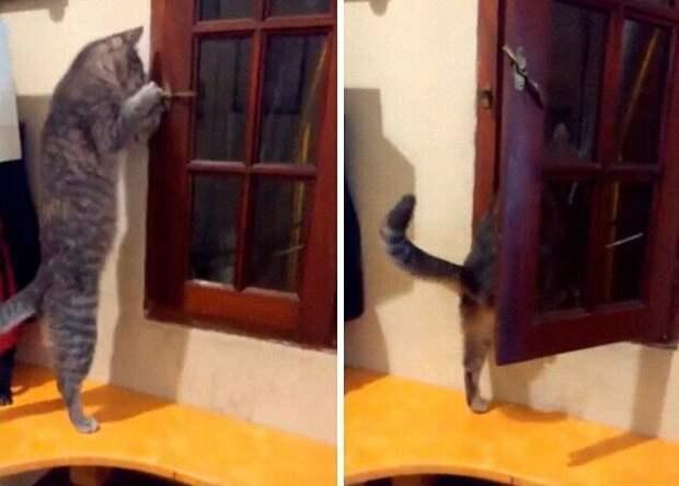 30 странных кошачьих привычек, которые для них в порядке вещей