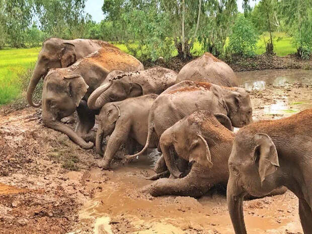 Из-за карантина никто не катается на слонах. Посмотрите, как они счастливы