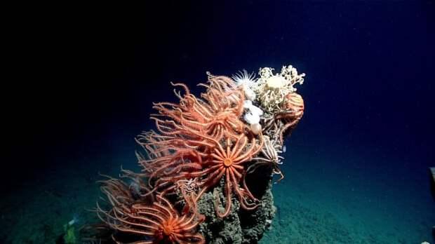 noaa-deep-ocean