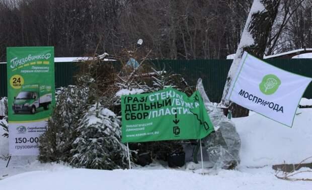 Прощание с новогодней елкой. «Елочный круговорот» стартует в Москве 9 января
