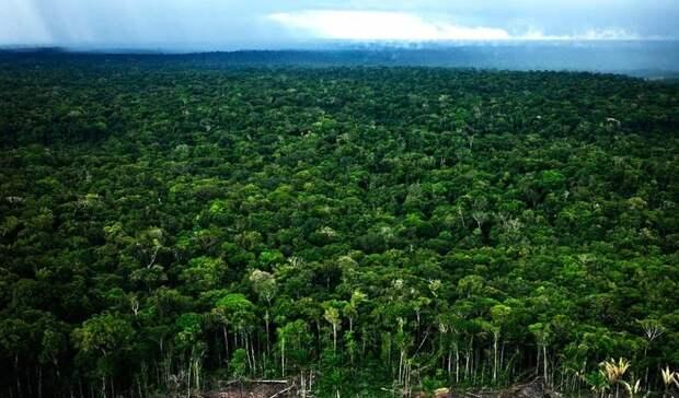 Amazonas08 Большое фотопутешествие по лесам Амазонки