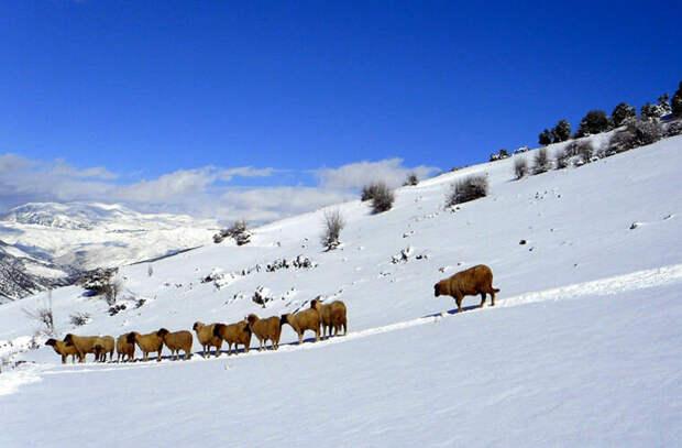 Зимой в Марокко бывает снег. А в некоторых местах даже присутствуют горнолыжные курорты