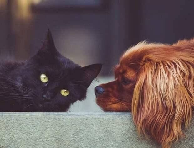 В Госдуму внесен законопроект об обязательной регистрации домашних животных