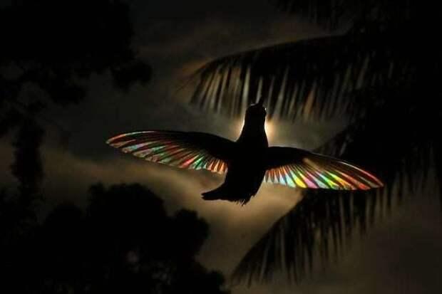 5 волшебных фото колибри, у которых крылья переливаются радугой
