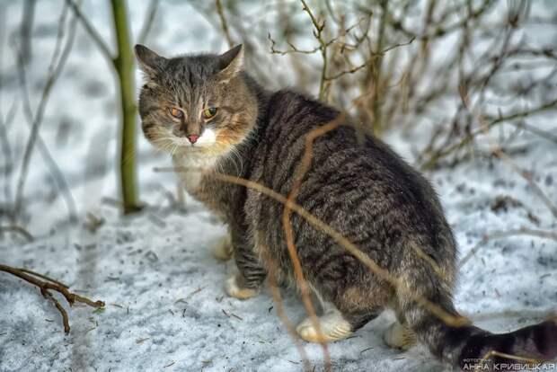 Умоляем, помогите! Хотя бы временной передержкой! Кошки погибают в пустом садоводстве, в холоде, без еды...